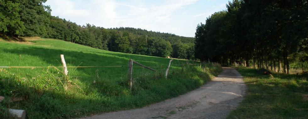 Biergarten, Landschaft Gerhard 027